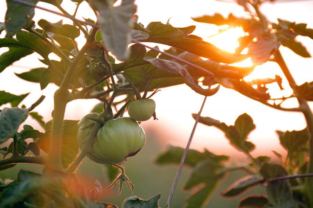 Follow the sun - gardening tips - reliable fiber home internet