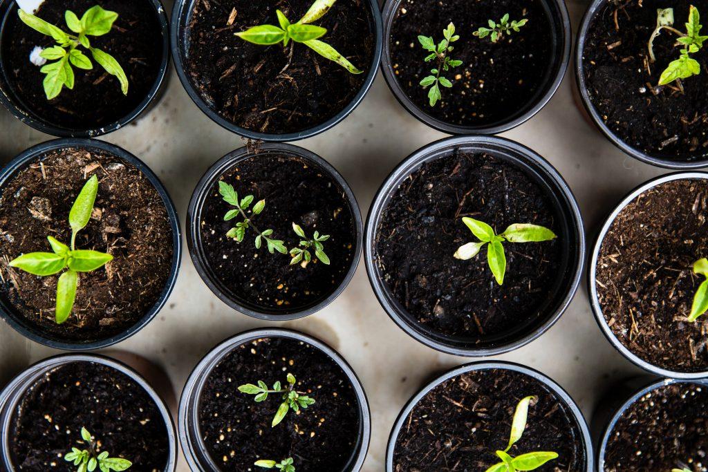 ensure good soil - gardening tips - reliable fiber home internet