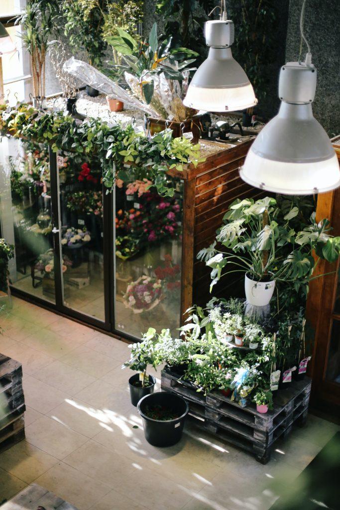 gardening tips - pro - reliable fiber home internet