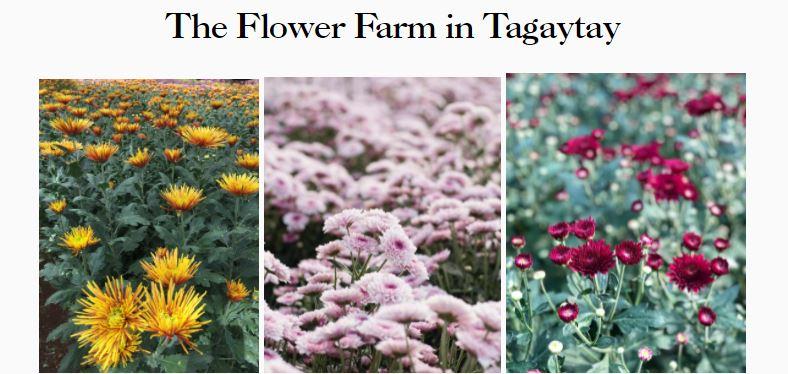 fiber home internet- flower farm tagaytay